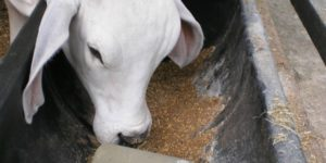 Sulfato de cobre en los animales